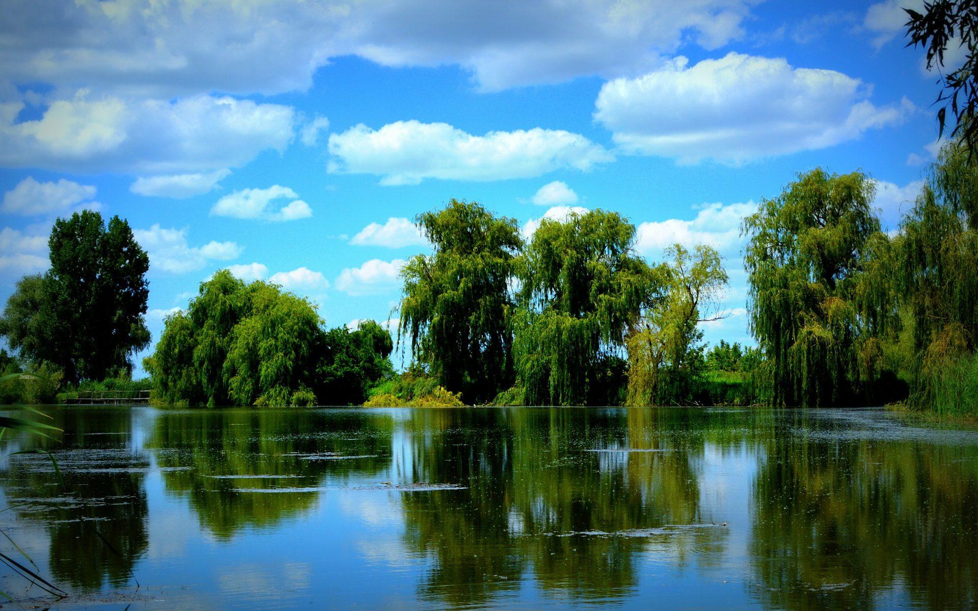 Blick auf den See mit Bäumen im Hintergrund