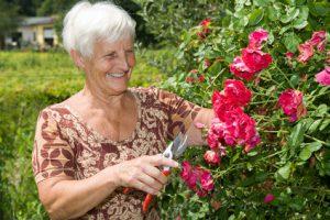 Großmutter schneidet rote Rosen im eigenen Garten dank Baufinanzierung
